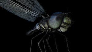 Dargonfly